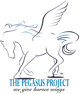 the pegasus project A home for every horse visited the pegasus project, a horse rescue, rehabilitation and training center, to continue our series of rescue visits that highlight all the.